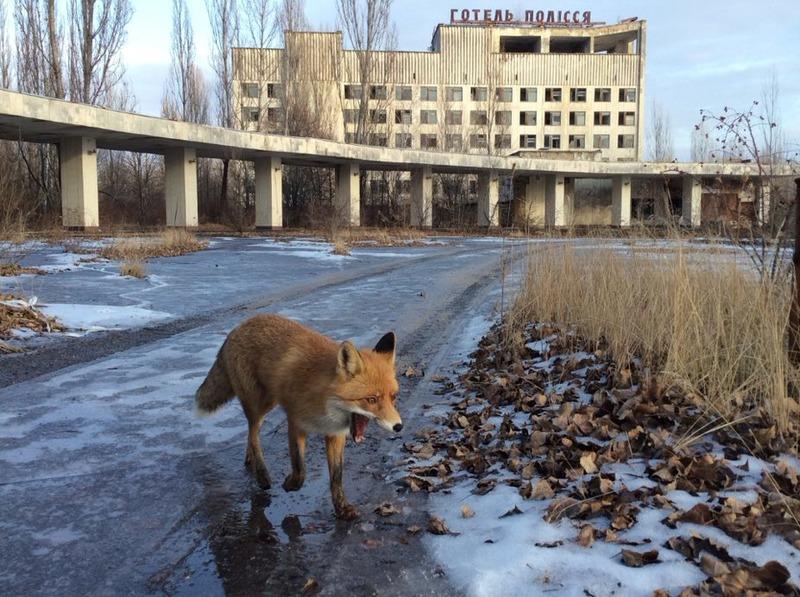Чорнобиль – 35 років після катастрофи, фото-9